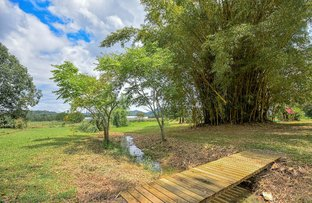 Picture of 156-162 Seib Road, Eumundi QLD 4562