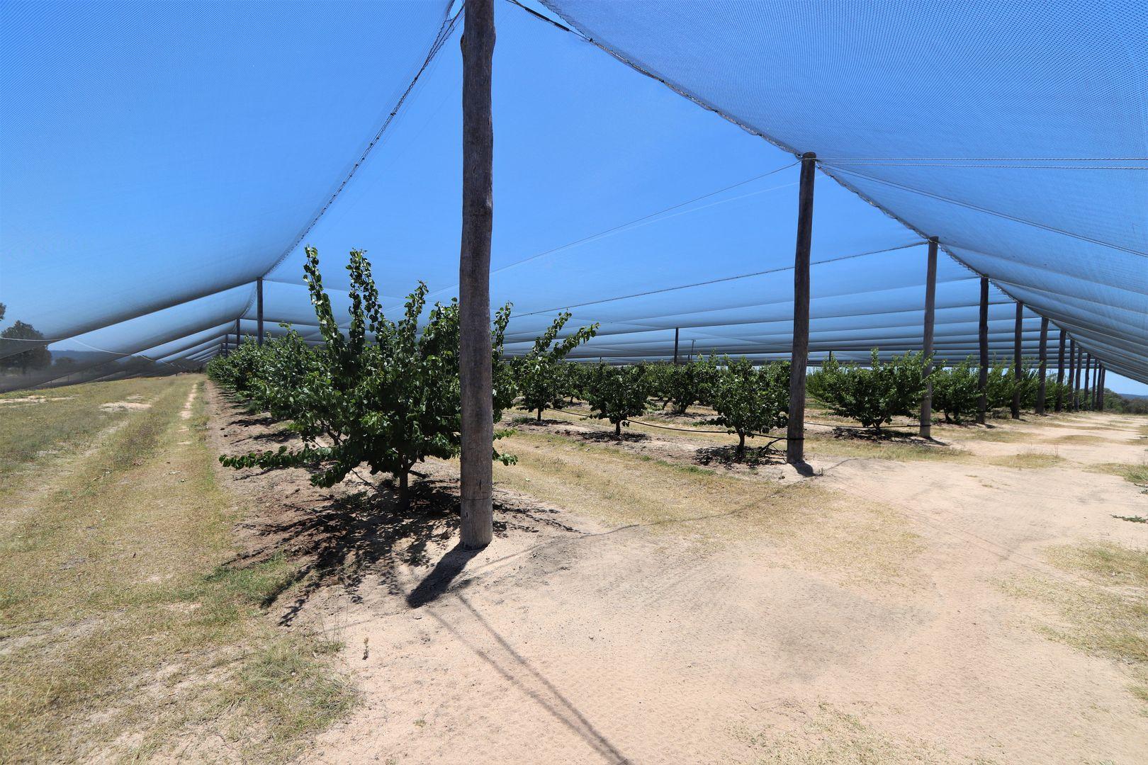 452 Glenvale Rd, Leslie Dam QLD 4370, Image 2