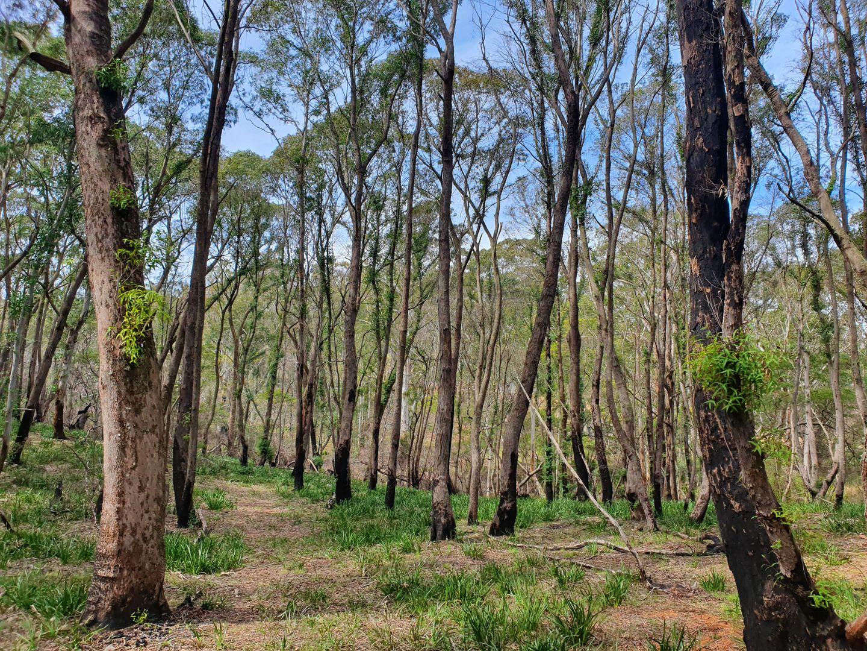 52 McRaes Road, Monga via, Braidwood NSW 2622, Image 1