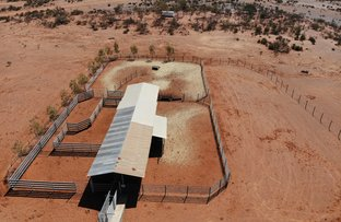 Picture of Winderie Station, Gascoyne Junction WA 6705