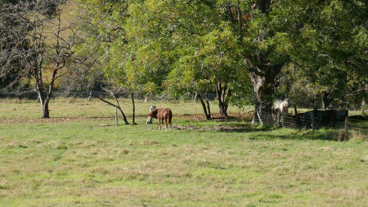 474 Duck Creek Road, Duck Creek NSW 2469, Image 1