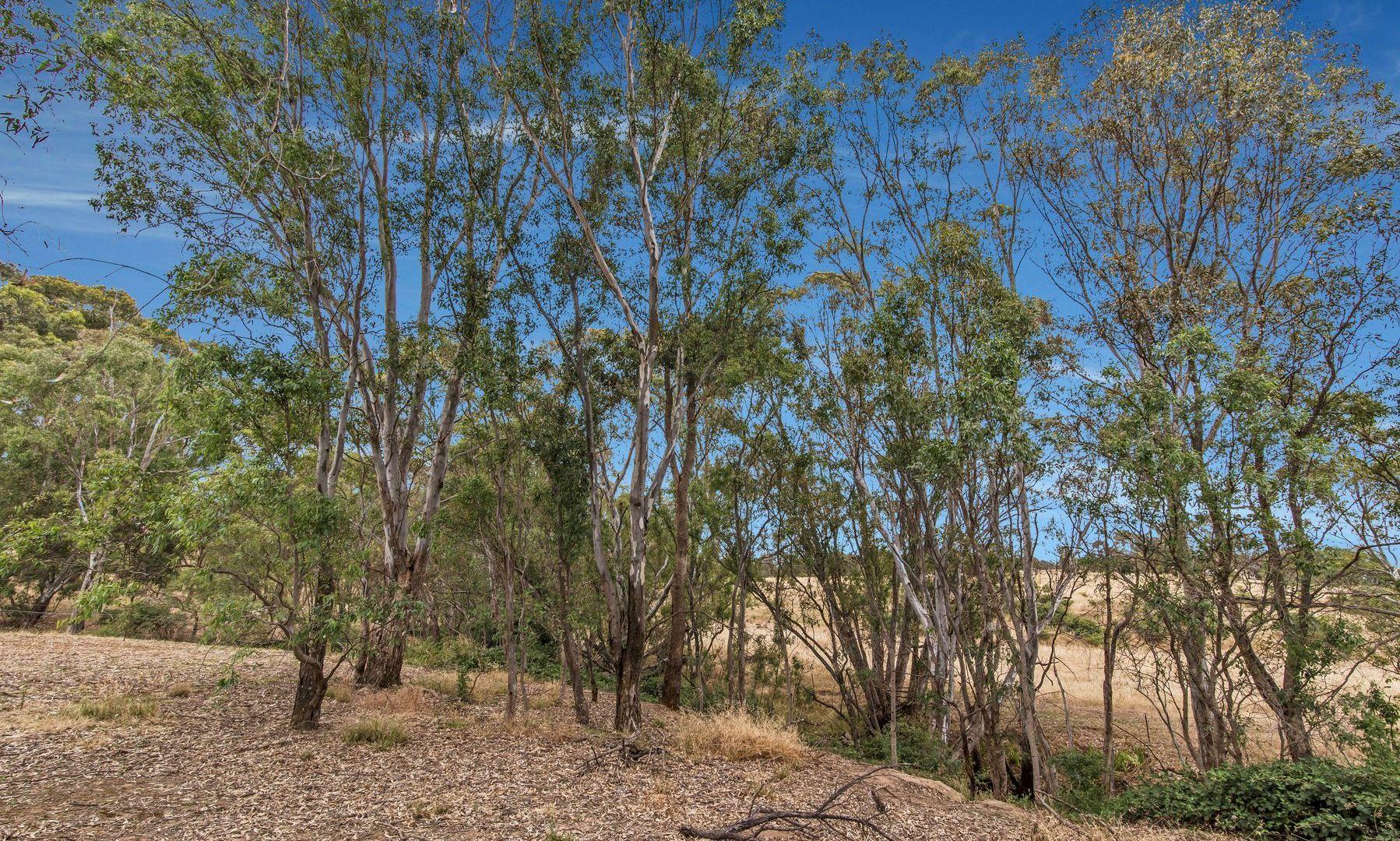 229 Red Tank Road, Emu Creek VIC 3551, Image 2