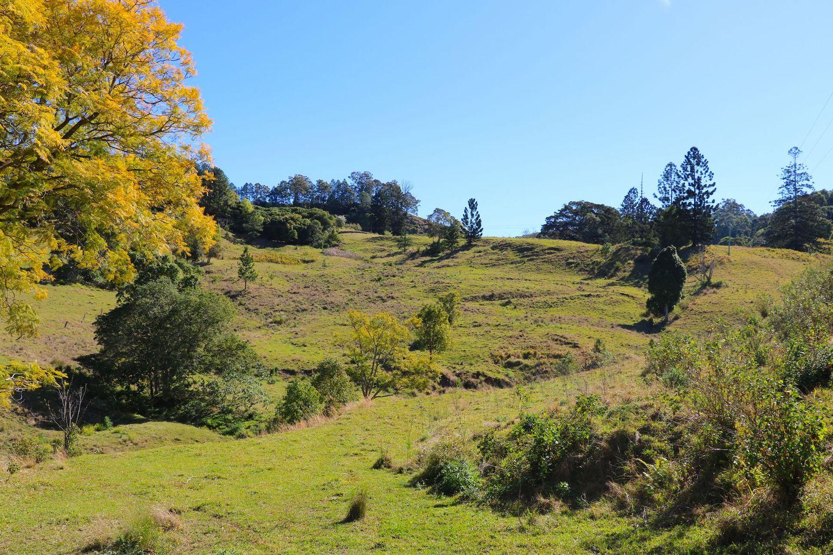 591 Tuntable Creek Road, Tuntable Creek NSW 2480, Image 1