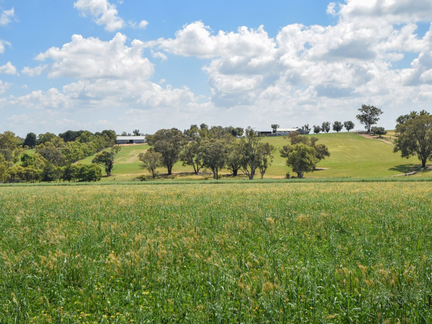 1106 Scenic Road, Young NSW 2594, Image 0
