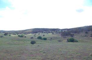 "Picture of ""Grandfathers Creek"", Nimmitabel NSW 2631"