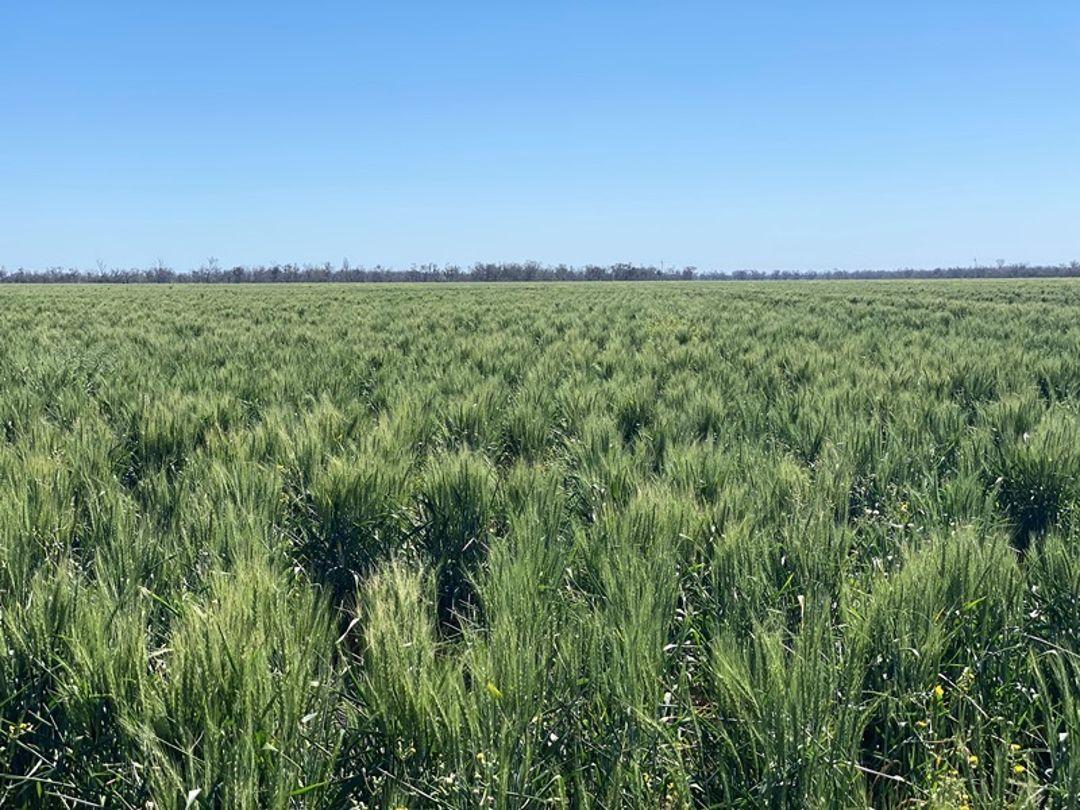 Coomonga, Goondiwindi QLD 4390, Image 0