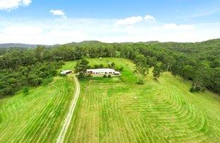 Picture of 296 Cedar Creek Road, Belli Park QLD 4562