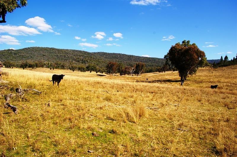 866 Wearnes Road, Bundarra NSW 2359, Image 2