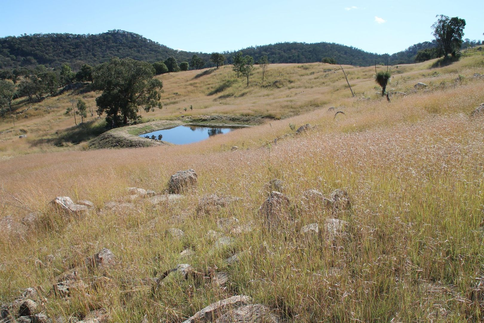 Lot 28 Gunyah Road, Tenterfield NSW 2372, Image 0