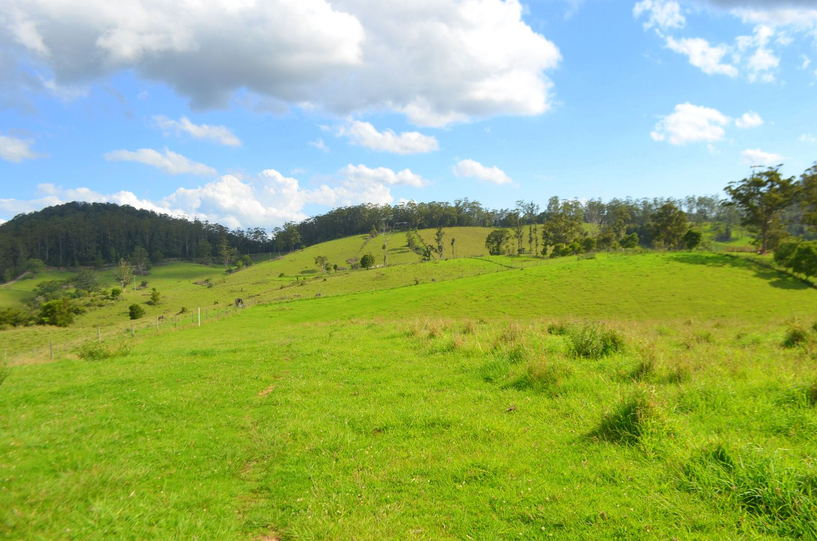 Lot 1 Willett Road, Bellthorpe QLD 4514, Image 1