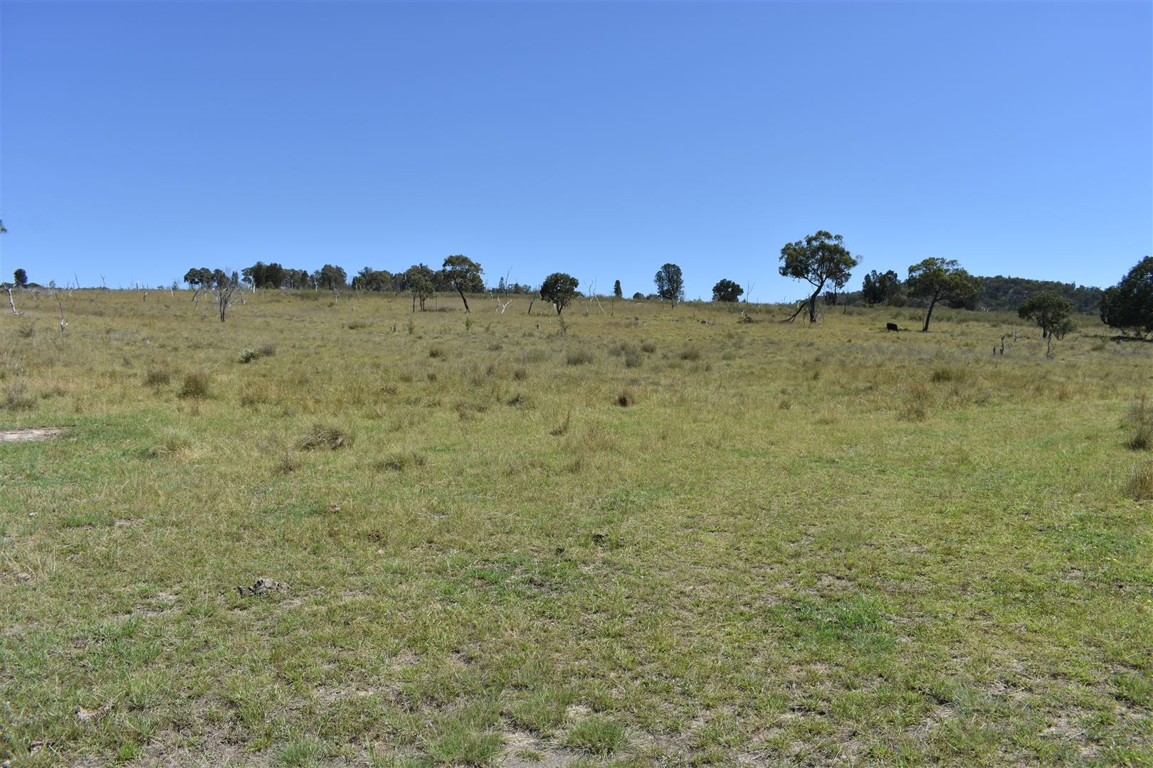 214 Tarban Road, Tenterfield NSW 2372, Image 1