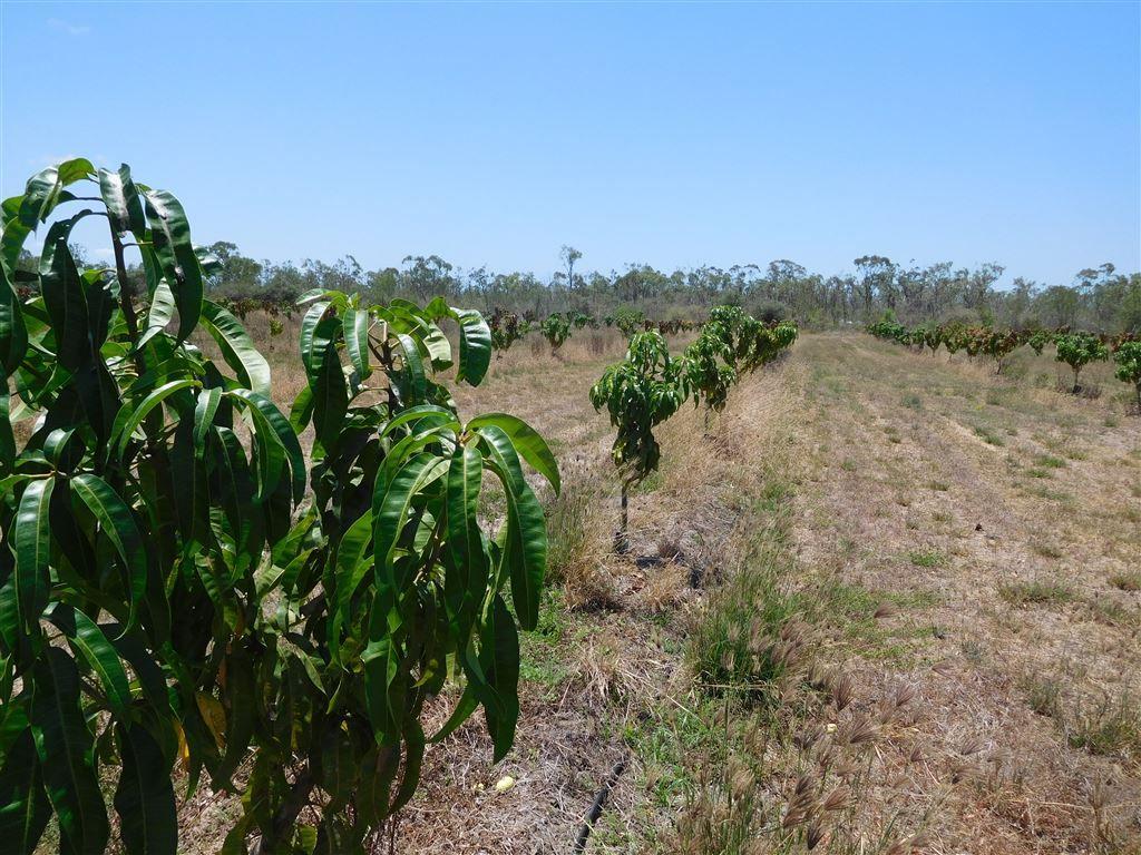 317 Balaam Road, Bowen QLD 4805, Image 2