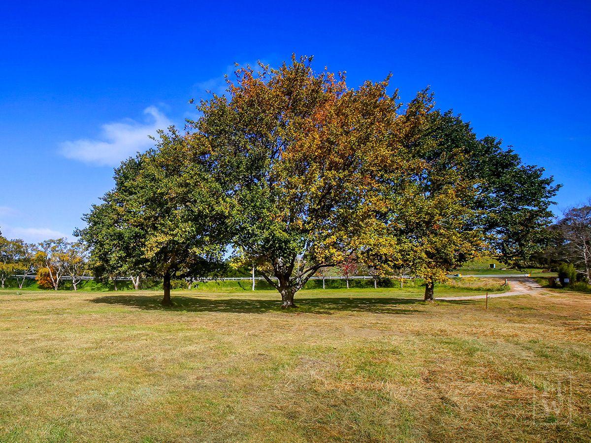 'Three Oaks' Hazelton Drive, Moss Vale NSW 2577, Image 1