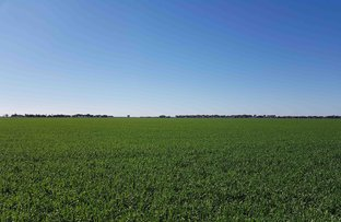 Picture of Morundah NSW 2700