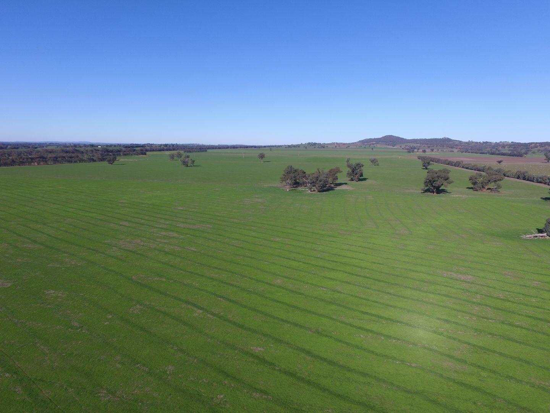Ingleneuk, The Rock NSW 2655, Image 2