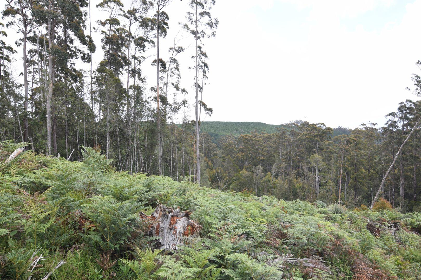 1 Murchison  Highway, Henrietta TAS 7325, Image 0