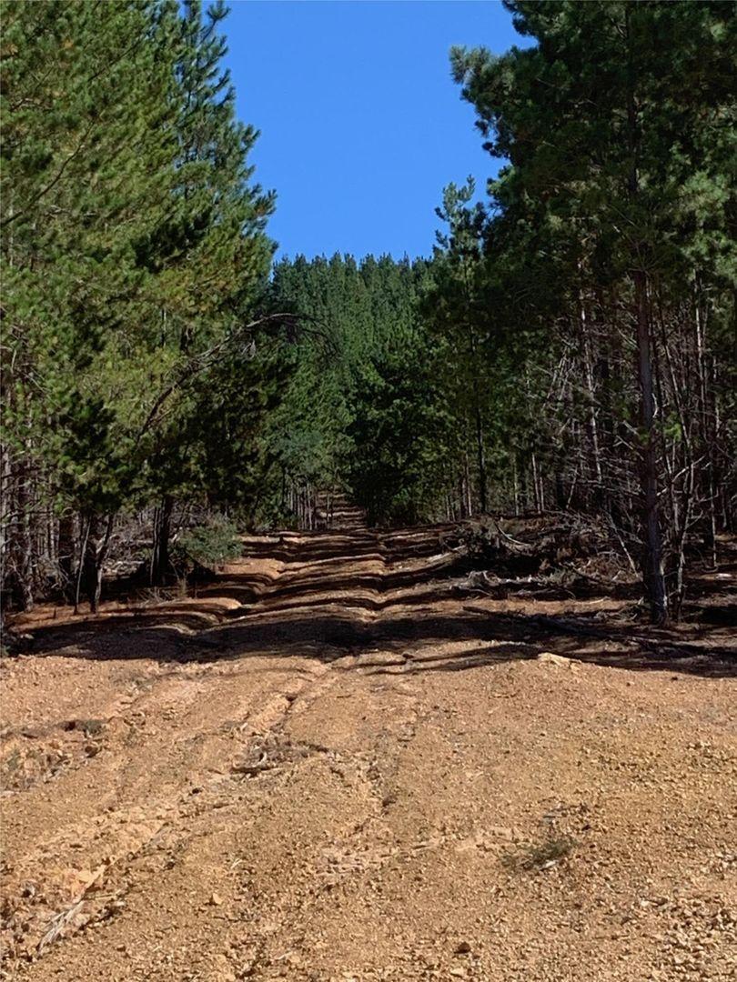 825 Dry Creek Road, Bonnie Doon VIC 3720, Image 2