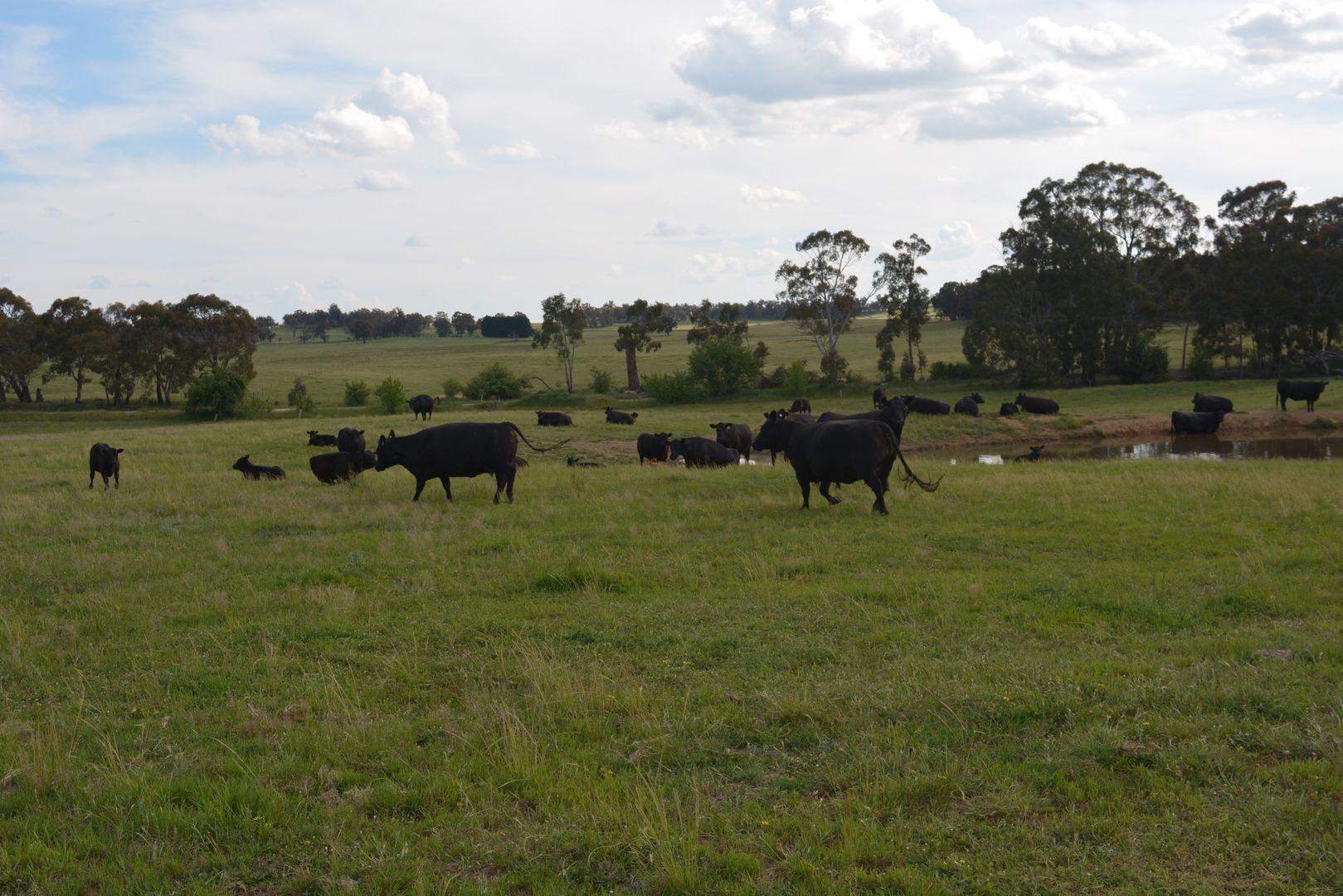 1566 Golspie Road, Taralga NSW 2580, Image 0