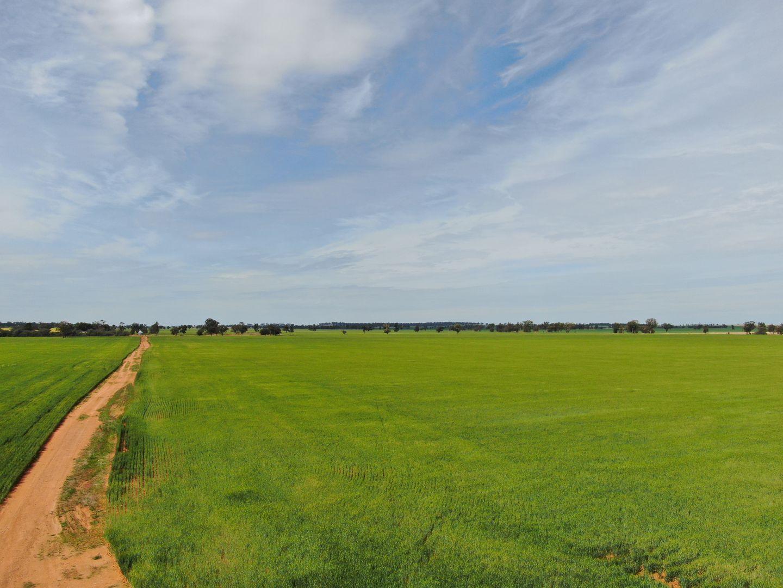 1842 Matong North Road, Cowabbie NSW 2652, Image 2