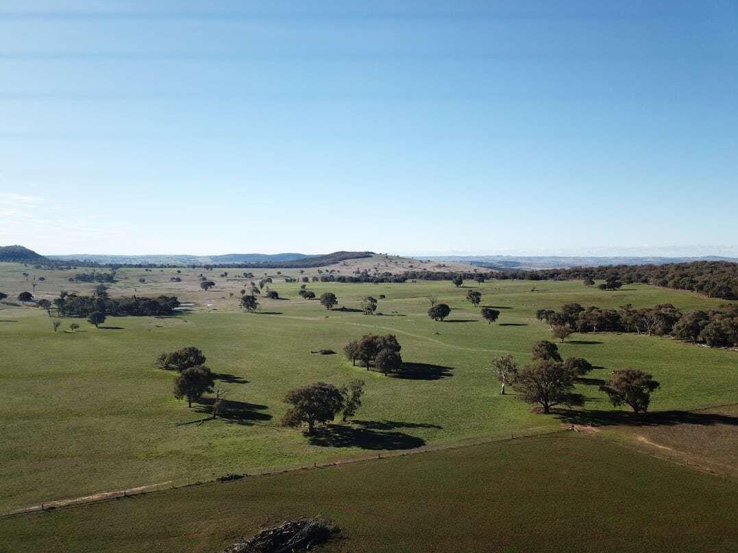 1380 Brawlin Rd, Cootamundra NSW 2590, Image 1