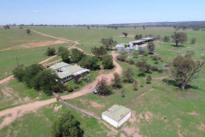 Picture of 'Summerhill' Mixed Farming Enterprize, CASSILIS NSW 2329