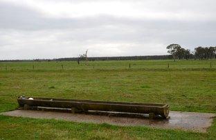 Picture of 296 Castine Road, Penola SA 5277