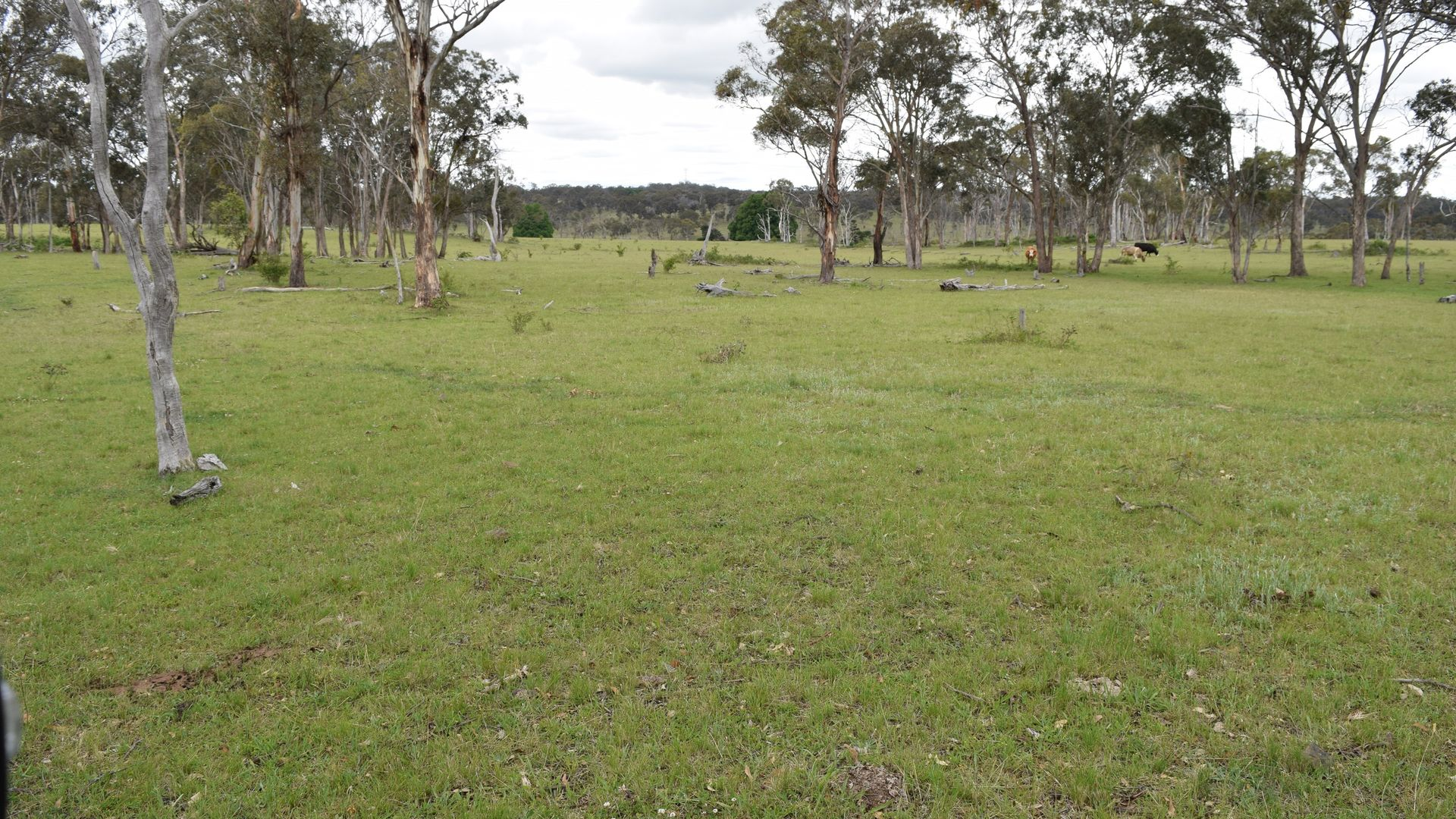 460 Donald Road, Armidale NSW 2350, Image 2