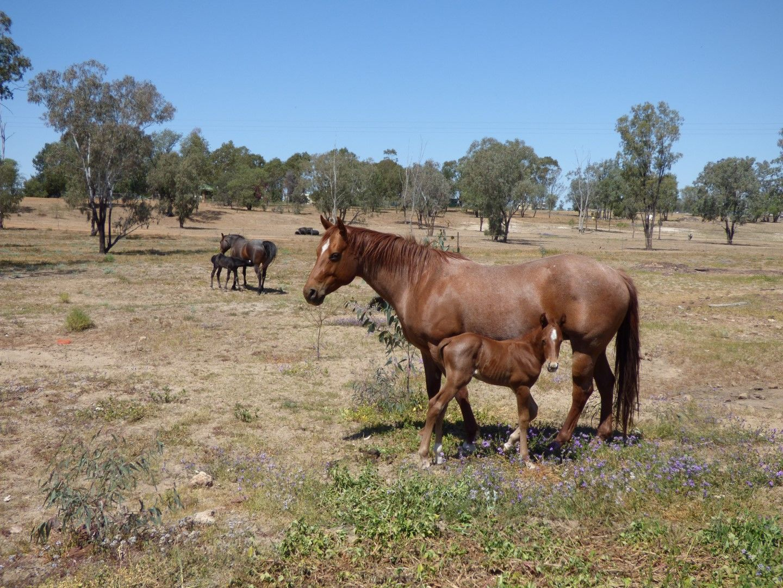 12733 Carnarvon Highway, St George QLD 4487, Image 0