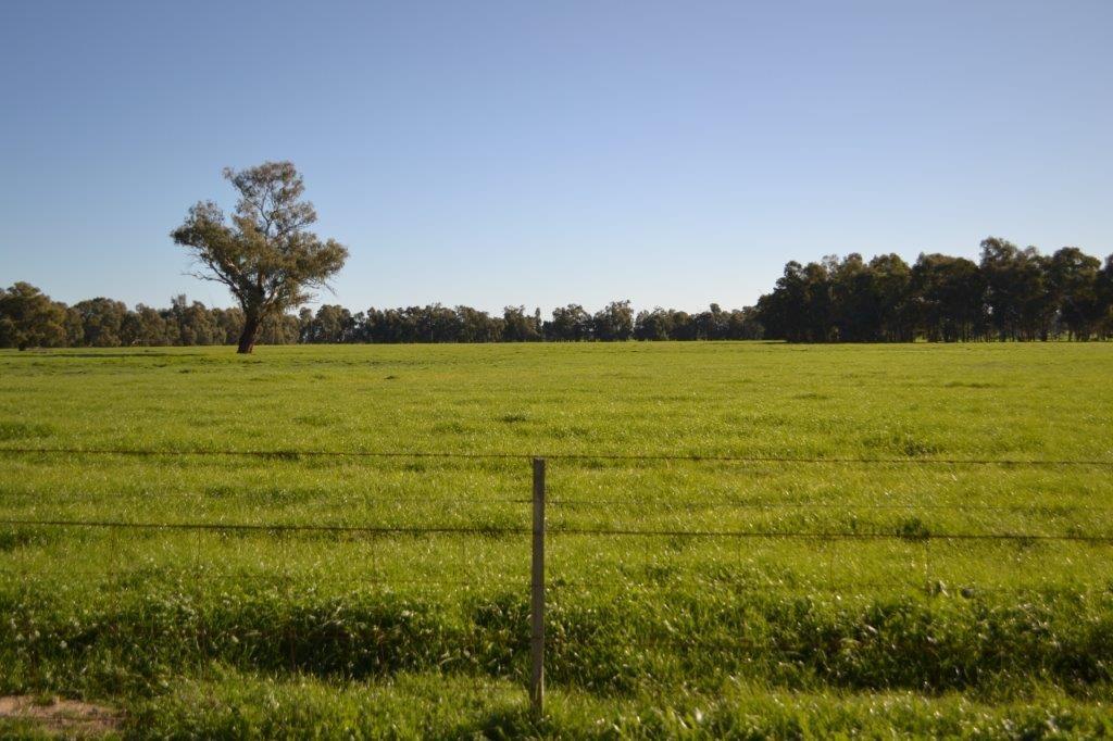 """Narrandera Park"", Euroley NSW 2700, Image 0"