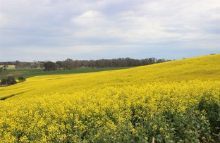 """Picture of """"Hyde Park Browns Road & Sunraysia Highway, Lexton VIC 3352"""