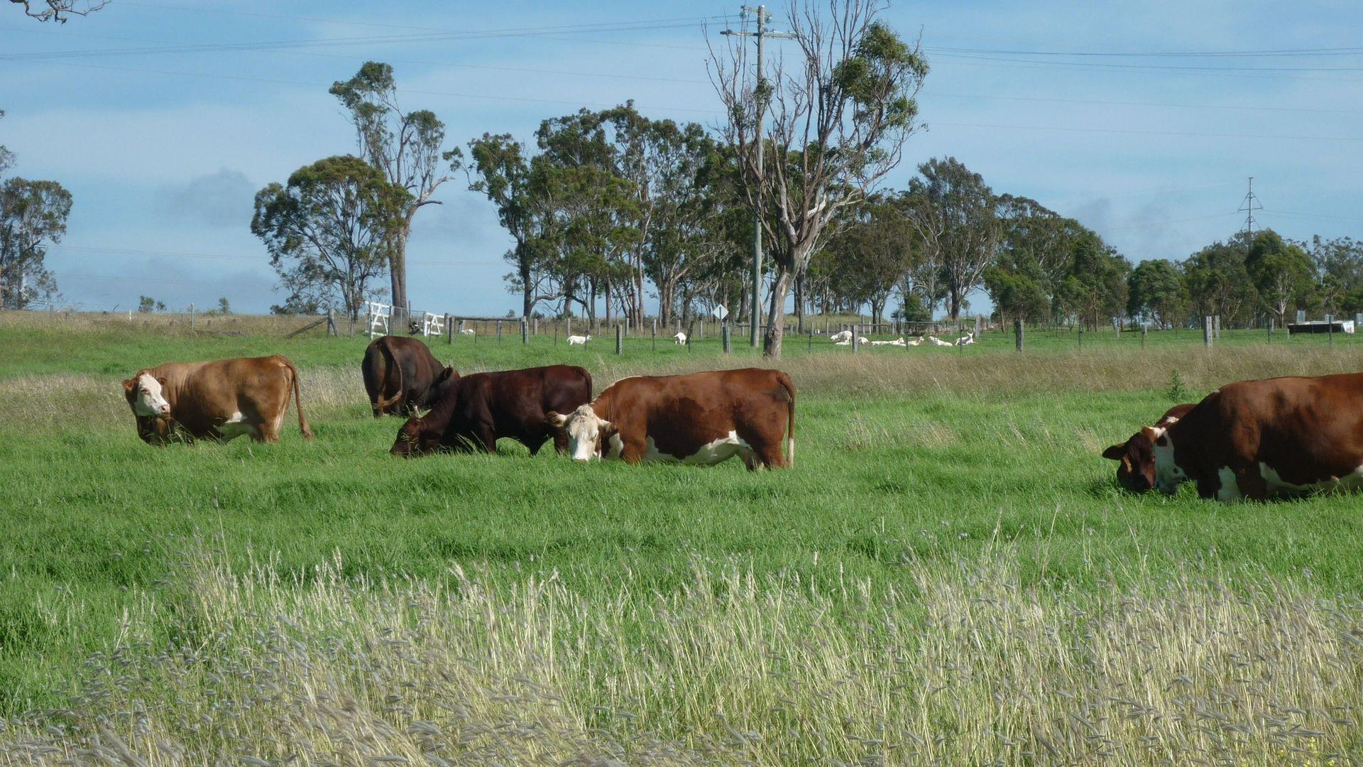 136 Dixon Lane, East Greenmount QLD 4359, Image 2