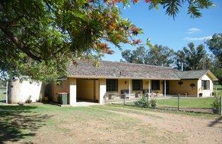 "Picture of ""Golden Vale"" 801  Kamilaroi Highway, Quirindi NSW 2343"