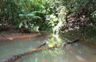 Picture of 60 Silver Ash Road, Daintree QLD 4873