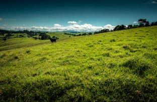 Maynards Plains Road, Dorrigo NSW 2453