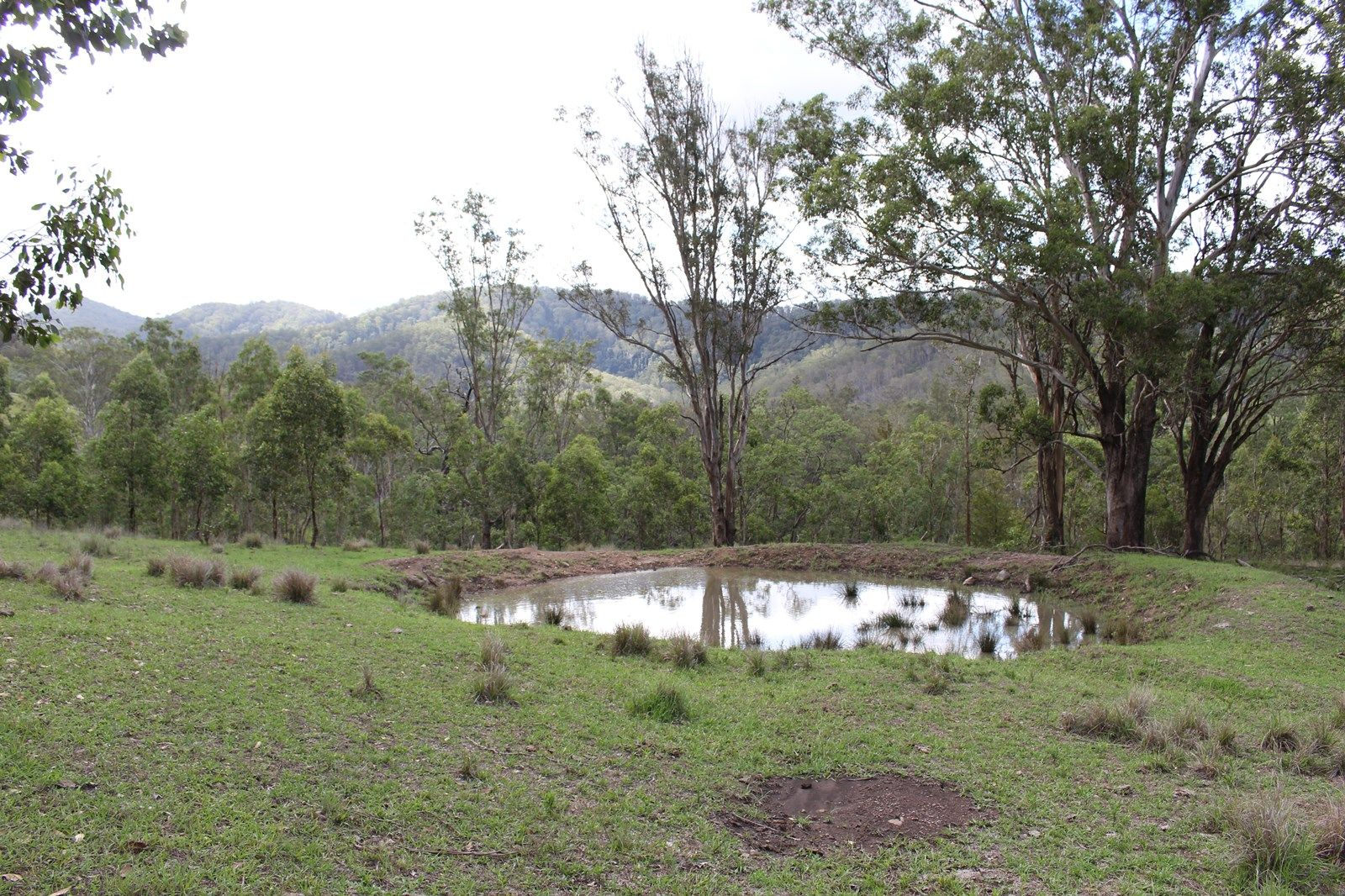 Lot 117 Bowman River Road, Gloucester NSW 2422, Image 1