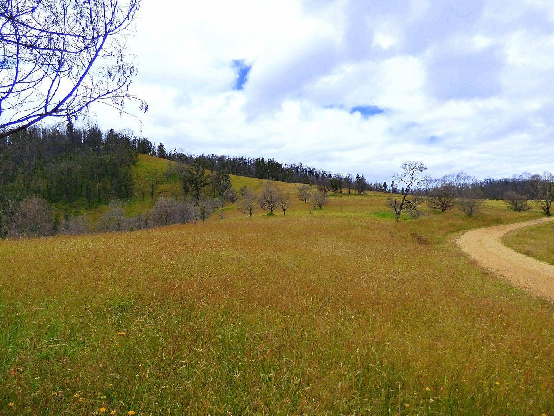 3353 Mount Darragh Rd, Wyndham NSW 2550, Image 2