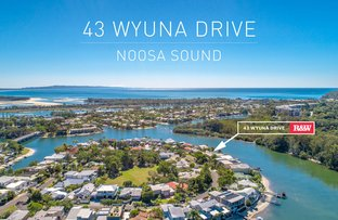 Picture of 43 Wyuna Drive, Noosaville QLD 4566