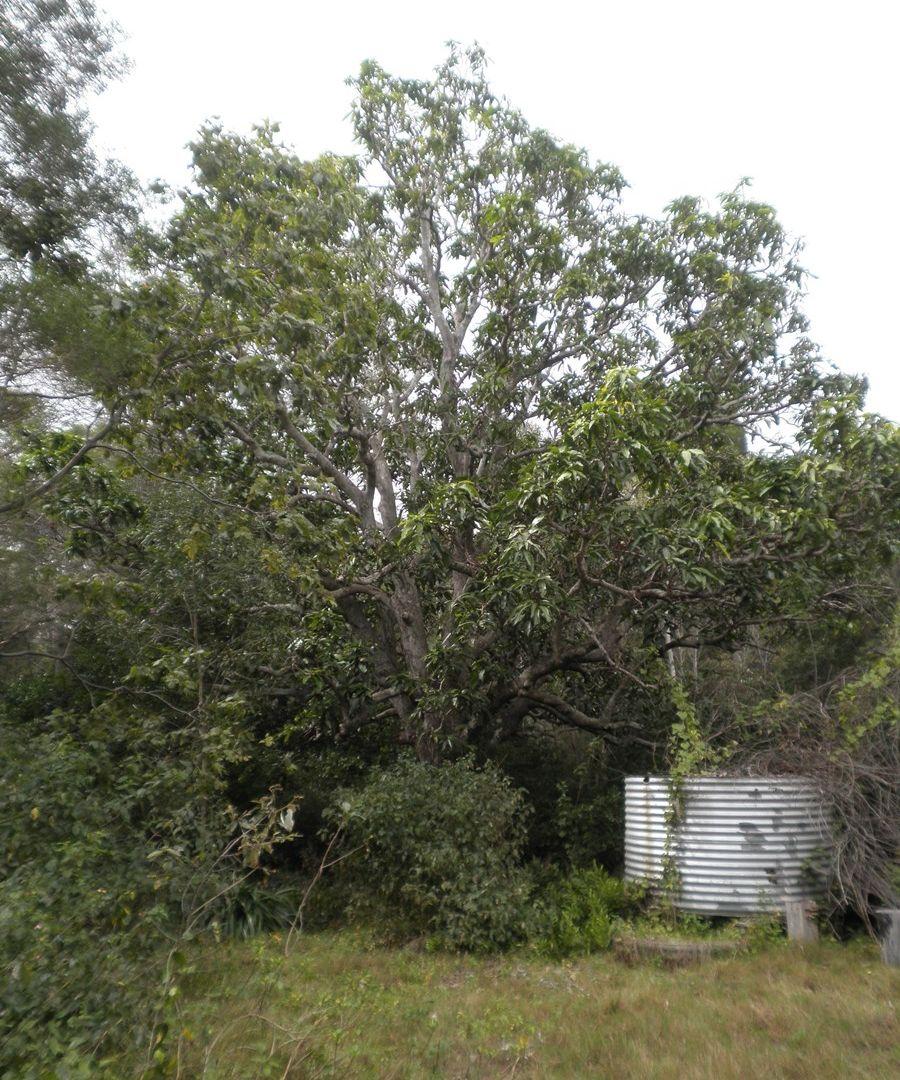 13 Prawle Street, Howard QLD 4659, Image 2