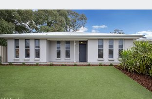 Picture of 2B Anthus Street, Lockleys SA 5032