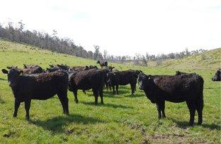 5060 Tasman Highway, Buckland TAS 7190