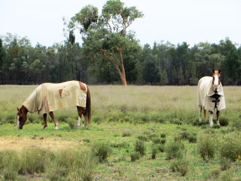 230 ACRES WEST OF, Dalby QLD 4405, Image 0