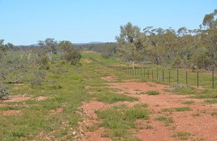 Picture of * Shady Camp, Hermidale NSW 2831