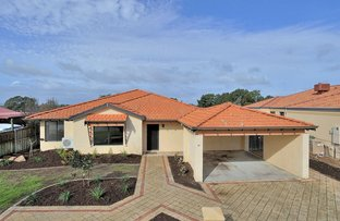 Picture of 11 Fantail Crescent, Ellenbrook WA 6069