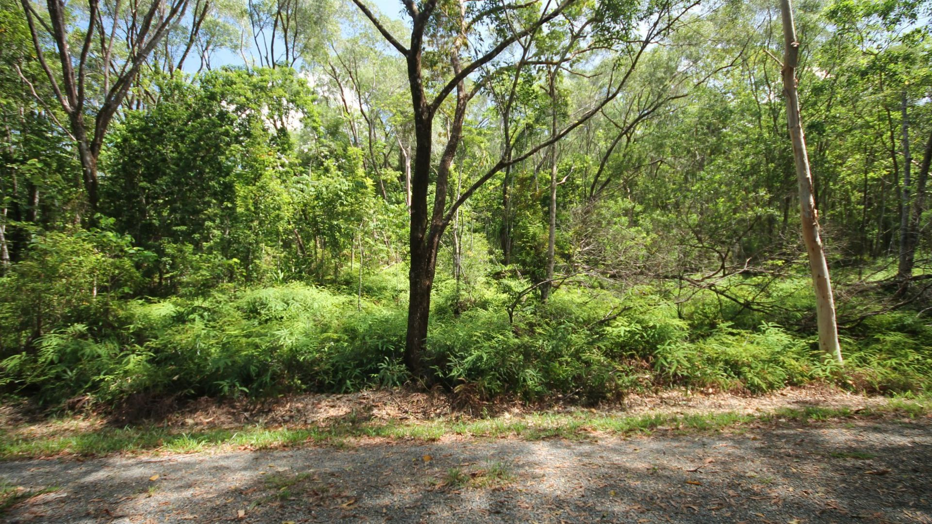 Lot 6 Andrew Road, Forest Creek QLD 4873, Image 2