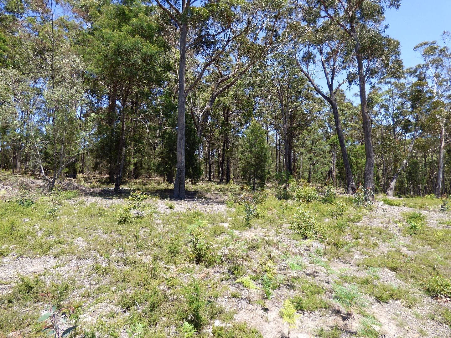 Lot D Gleeson Road Wonboyn Via, Eden NSW 2551, Image 1