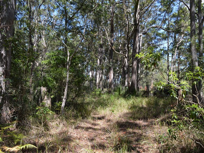 Lot 2 Curramore Road, Curramore QLD 4552, Image 1
