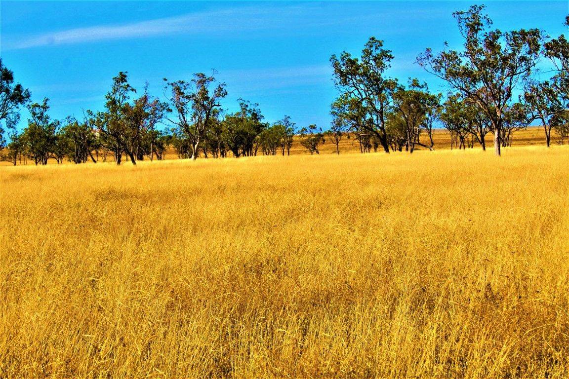 0 Plain Farm, Roma QLD 4455, Image 0