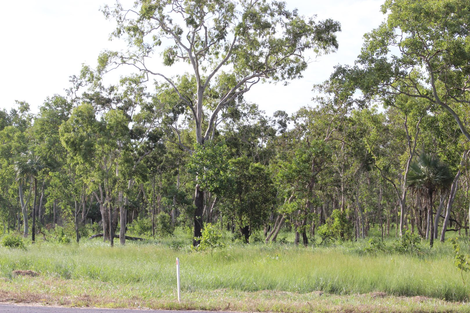 1384 Endeavour Valley Rd, Cooktown QLD 4895, Image 2
