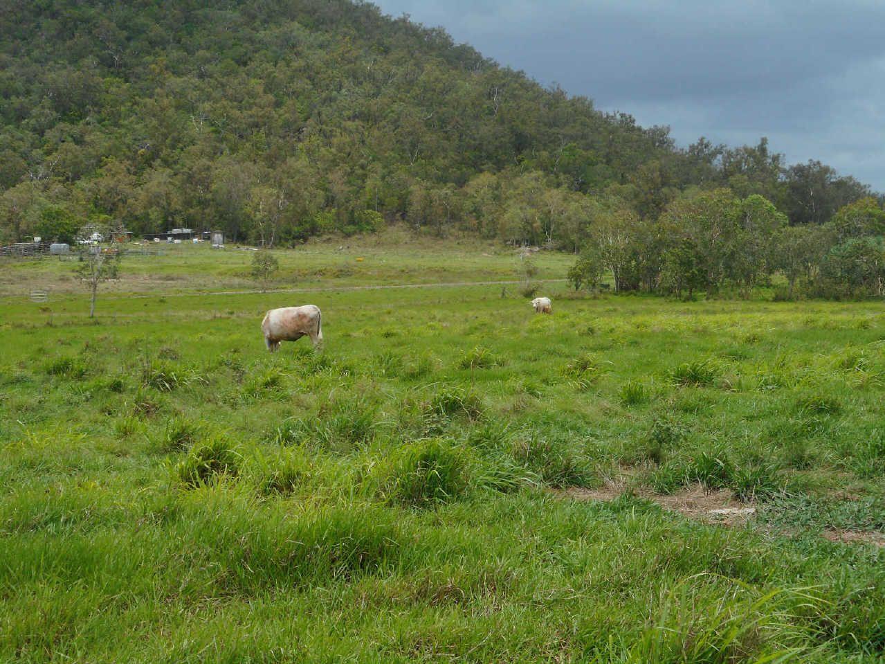 12 Carlton Road, Sarina QLD 4737, Image 0