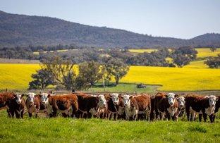 Picture of 133 Frampton Road, Cootamundra NSW 2590